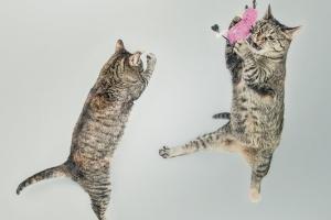 猫がネズミに飛びつく