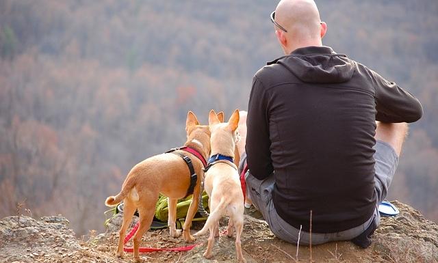ハゲている男性と犬